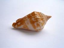 Shell hermoso del mar Foto de archivo libre de regalías