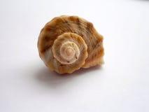Shell hermoso del mar Fotografía de archivo