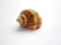 Shell hermoso del mar Imágenes de archivo libres de regalías
