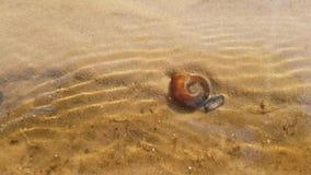 Shell in het water op het zand stock videobeelden
