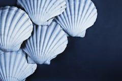 Shell-Hintergrund Stockfotos
