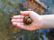 Shell i en hand för barn` s royaltyfri bild