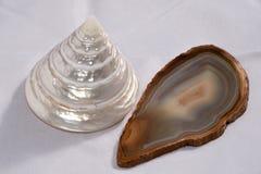 Shell i förgrund på vit bakgrund Arkivfoton