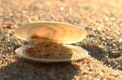 Shell i ljuset på stranden royaltyfri fotografi