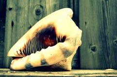 Shell i trädgården Royaltyfri Fotografi