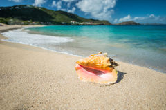 Shell i une mer des Caraïbes images stock