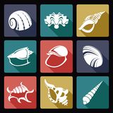 Shell icons. Vector image of collection of shell icons Royalty Free Stock Image