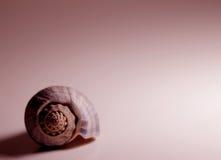 Shell im Rot stockfoto