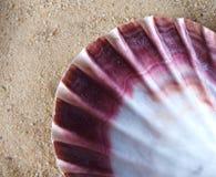 Shell im Sand Lizenzfreie Stockfotografie