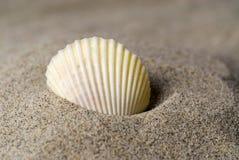 Shell im Sand stockfoto