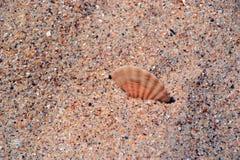 Shell im Sand stockbilder