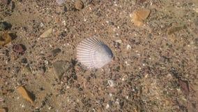 Shell im Strand masern Lizenzfreie Stockbilder