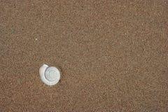 Shell im Strandsand lizenzfreie stockfotos