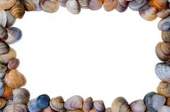 Shell image frame. Sea shell on white background, as frame Royalty Free Stock Images