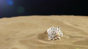 Shell incomum do mar, branco, na areia, preto, sombra filme