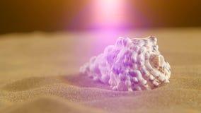 Shell incomum do oceano, branco, na areia, luz traseira vídeos de arquivo