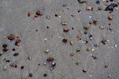 Shell insabbia la spiaggia del mare Fotografia Stock