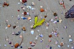 Shell insabbia la spiaggia del mare Fotografia Stock Libera da Diritti