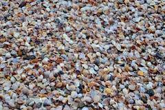 Shell insabbia la spiaggia del mare Fotografie Stock