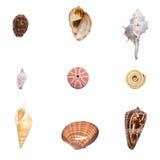 Shell inzameling Royalty-vrije Stock Foto's