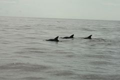 Shell Island, plage de Panamá City de dauphins de la Floride trois photo libre de droits