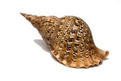 Shell isolent Photos stock