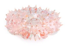 Shell king crab Royalty Free Stock Photography