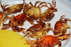 Shell-krabben, op witte achtergrond worden geïsoleerd die Stock Afbeelding
