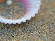 Shell kugghjul Royaltyfri Foto