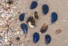 Shell a la costa de mar, crustáceos, ferroso y blanco, arena fotografía de archivo