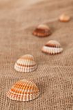Shell laing on jute Royalty Free Stock Photo