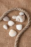 Shell laing on jute Royalty Free Stock Image