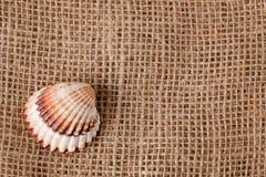 Shell laing on jute Stock Images