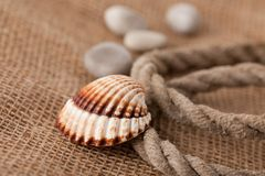 Shell laing on jute Royalty Free Stock Photos