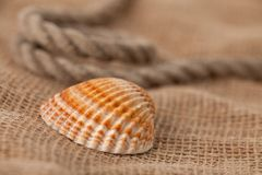 Shell laing on jute Stock Photos