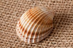 Shell laing on jute Stock Images