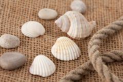 Shell laing on jute Stock Photo