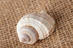 Shell laing on jute Royalty Free Stock Images