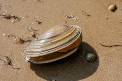 Shell on a lake shore Stock Image