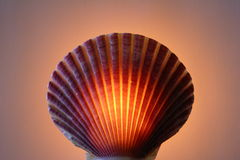Shell lamp Royalty Free Stock Photo
