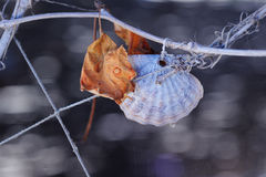Shell and Leaf on a Rope. Shells and a dry leaf tied to a rope on vine branch Stock Photo