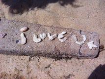Shell-liefde Stock Foto