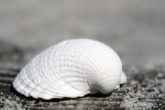 Shell lies at the beach Stock Image