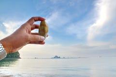 Shell lixa a praia do mar Imagens de Stock