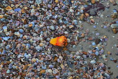 Shell lixa a praia do mar Imagem de Stock Royalty Free