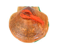 Shell with Lobster Souvenir Overhead View Royalty Free Stock Image
