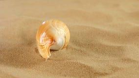 Shell longo com areia, rotação do mar, fim acima filme
