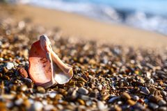 Shells on the beach. royalty free stock photography