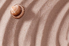 Shell lying on sand Royalty Free Stock Image