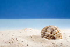 Shell lying on sand at beach Stock Photography